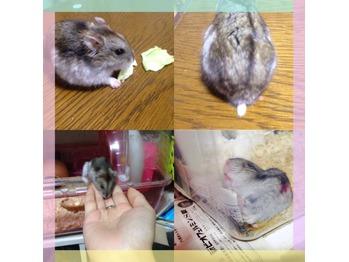 http://beauty.yumeyakata.com/beauty_voice/I008999096_349-262.jpg